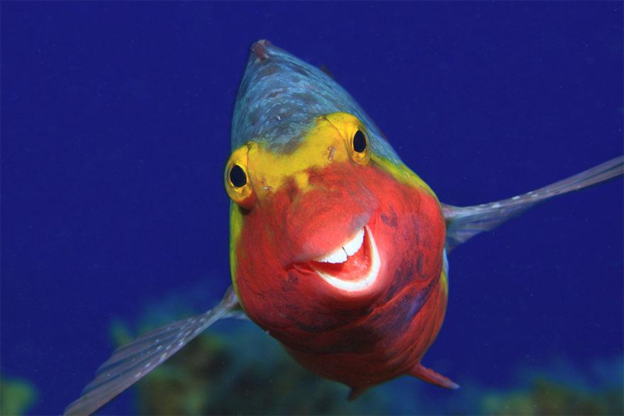 Curiose, divertenti, esilaranti: le foto di animali che fanno sorridere