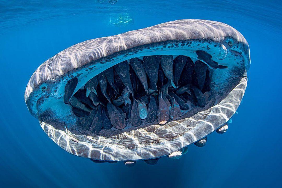 Mostri marini e altre meraviglie dai fondali: i vincitori dell'Underwater Photo Contest 2020