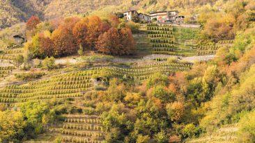via dei terrazzamenti in Valtellina