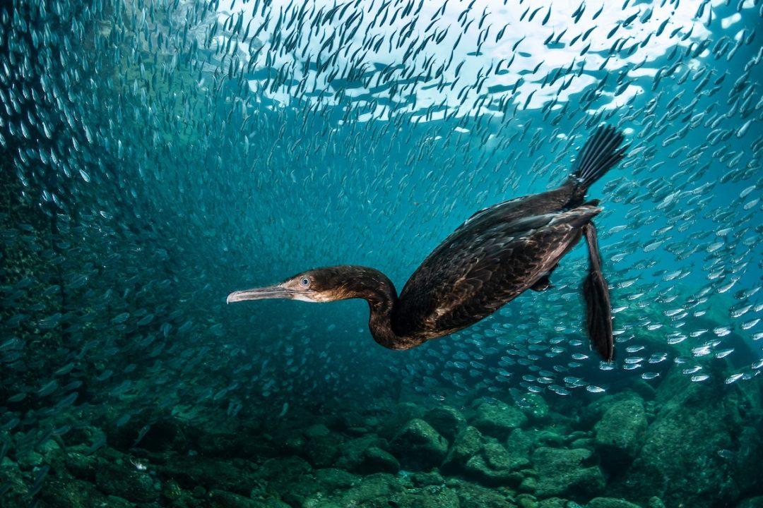Colti al volo: gli scatti vincenti del Bird Photographer of the Year 2020