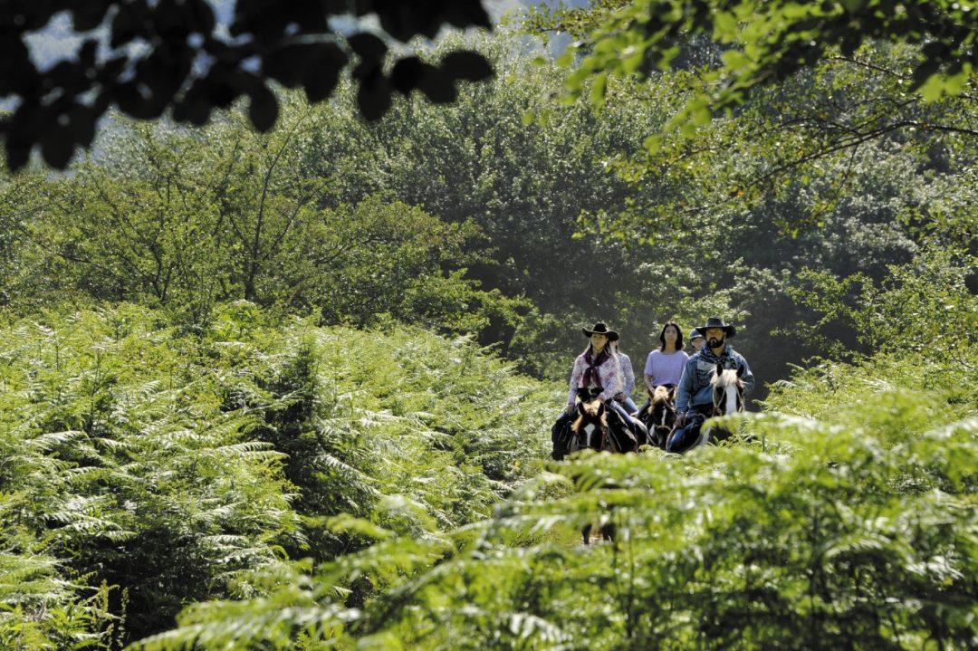 Vacanza in Molise, cosa vedere e dove andare (a piedi, in bici, a cavallo)