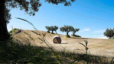 Calabria a piedi