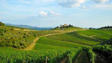 Un'immagine dei vigneti del Chianti Classico (ph. Consorzio vino Chianti Classico)