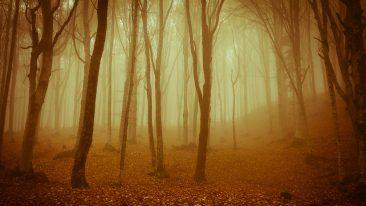 Il foliage spettacolare delle Foreste Casentinesi