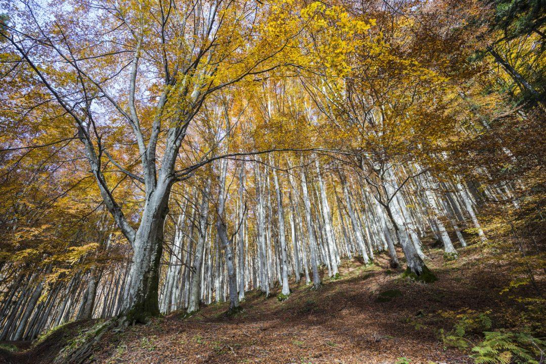 Magie d'autunno: tutti i colori del foliage nelle Foreste Casentinesi