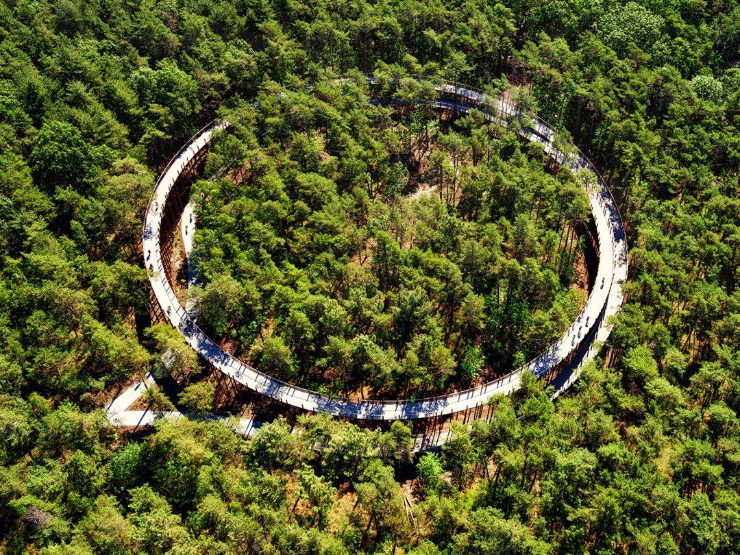 """La magica pista ciclabile in Belgio: un anello per pedalare """"sopra"""" le cime degli alberi"""