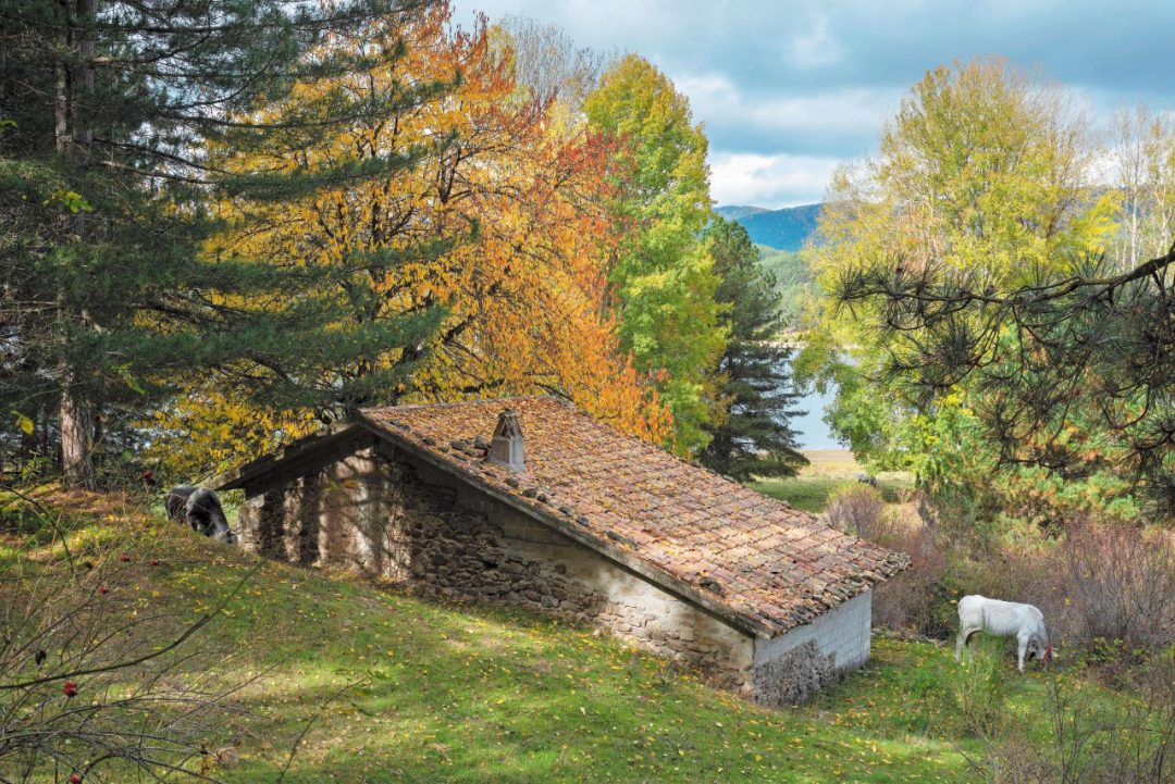 Sila, foliage spettacolo in Calabria