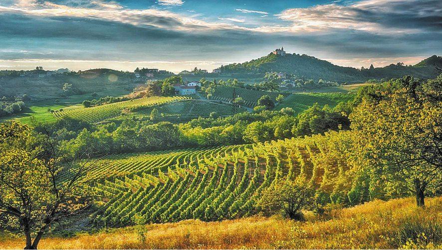 Tra le colline del Gavi: un tour del gusto nel Piemonte che sa di Liguria