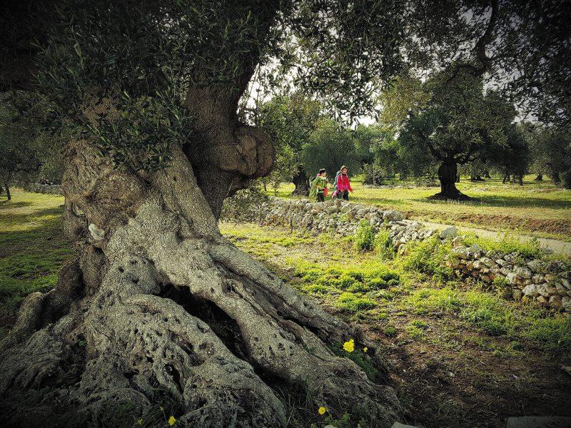 In cammino lungo la  Via Ellenica: il nuovo itinerario da Brindisi a Matera