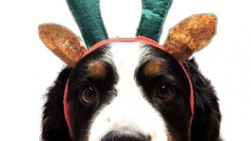 Romeo, la mascotte di DOVE. Il cucciolone della nostra art director Cinzia Brunone.