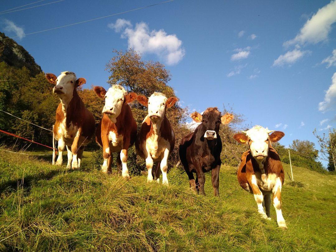 Famiglia Petris: formaggi di malga e mucche da adottare