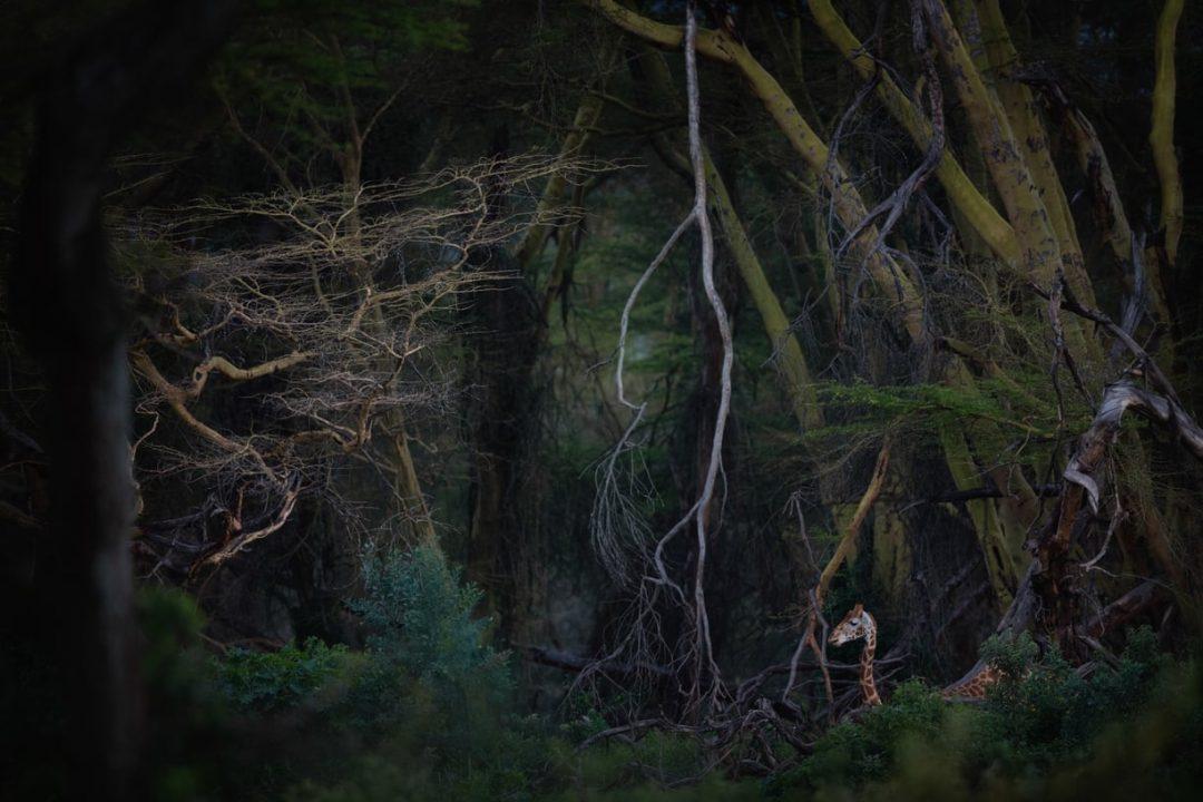 """Foreste, oceani, animali in libertà. Le più belle foto del concorso """"Nature photographer of the year"""""""