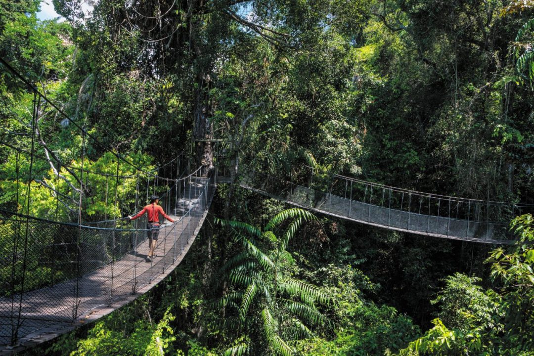 Borneo Malese: avventura nella giungla