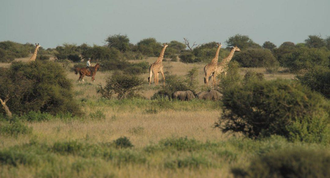 Sognando il Botswana: l'emozione di un safari nella natura più selvaggia