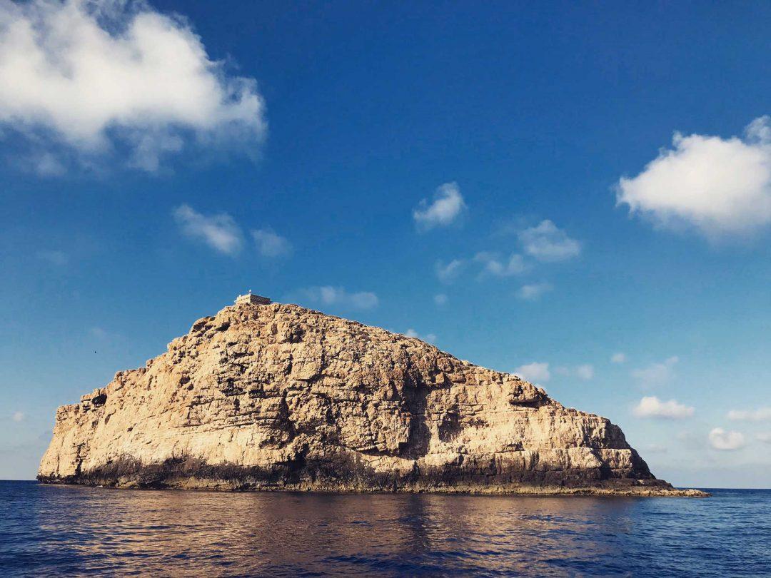 Il mistero dei 40 squali grigi all'Isola di Lampione: cronaca di un incontro ravvicinato