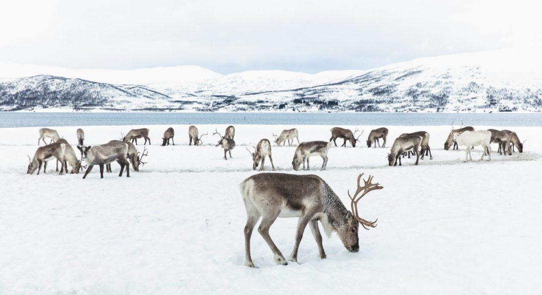 Norvegia, l'immenso bianco di Sommarøy. Tour fra le isole al largo di Tromsø, nelle terre dei Sami