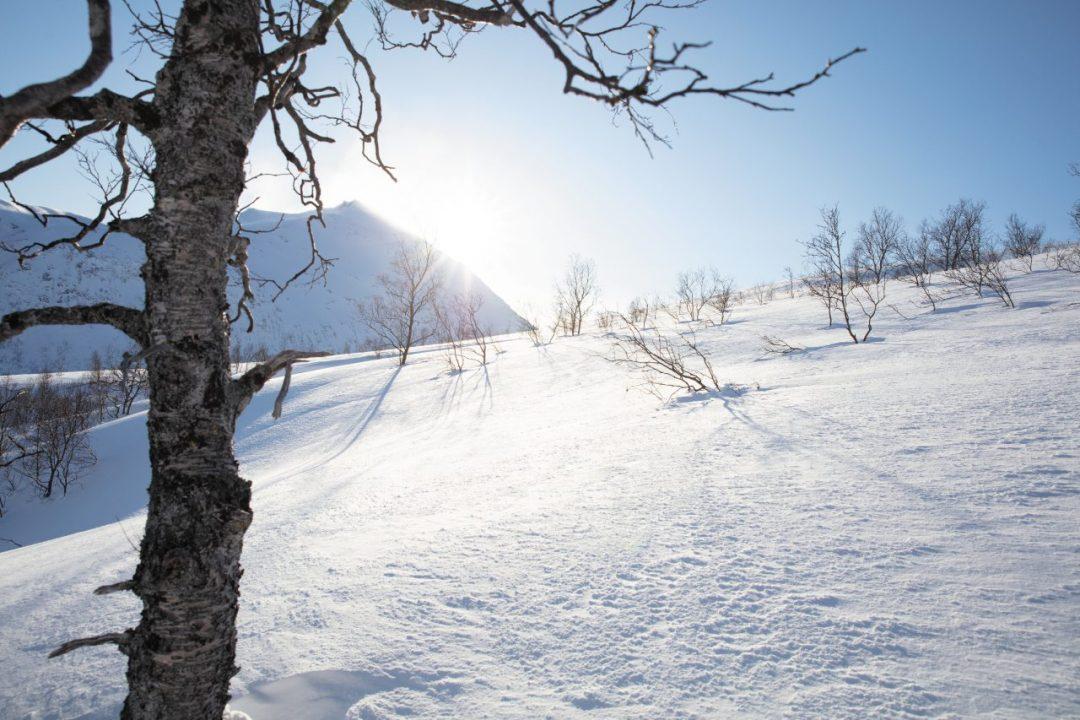 Norvegia, l'immenso bianco di Sommarøy. Tra le renne al largo di Tromsø, nelle terre dei Sami