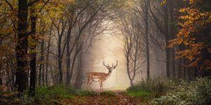 Giornata Mondiale della Natura 2021: riflettori puntati sulle foreste a rischio