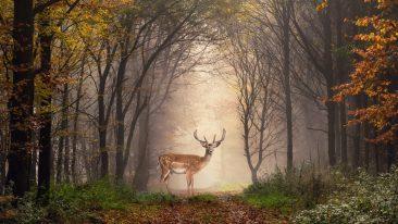 Giornata Mondiale della Natura 2021