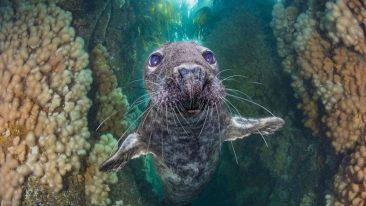 Foto subacquee premiate