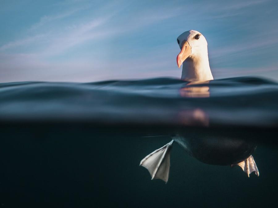 La magia del mondo subacqueo: i vincitori dell'Underwater Photographer of the Year 2021