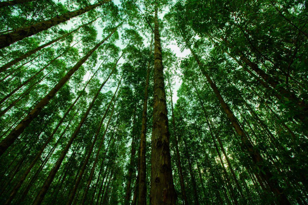 Giornata Internazionale delle Foreste 2021