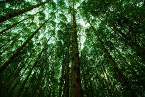 Giornata internazionale delle Foreste 2021: cos'è e perché è nata. Eventi e curiosità