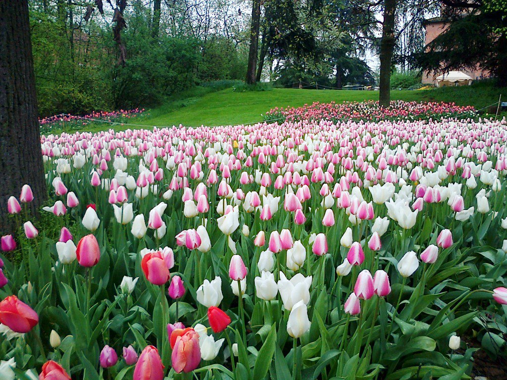 I tulipani del Castello di Pralormo - Piemonte