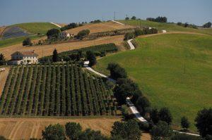 On the road nelle Marche, tra le colline dei castelli di Jesi