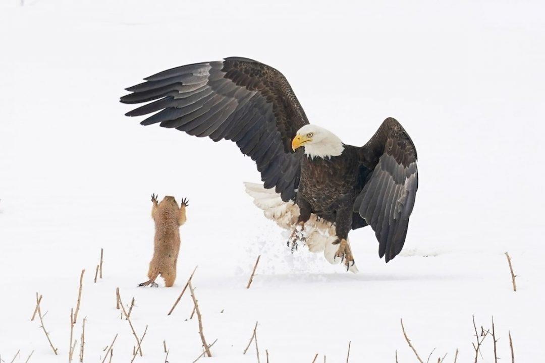 """Animali che fanno ridere: le foto dei """"Comedy Wildlife Photography Awards"""""""