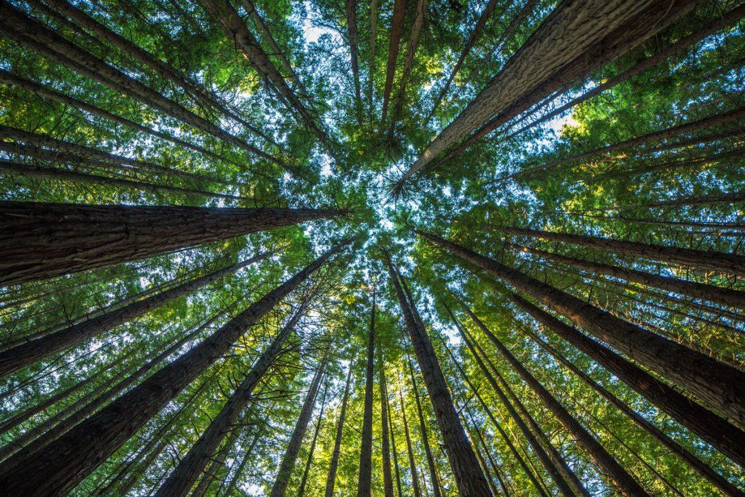 Decennio delle Nazioni Unite sul ripristino degli ecosistemi