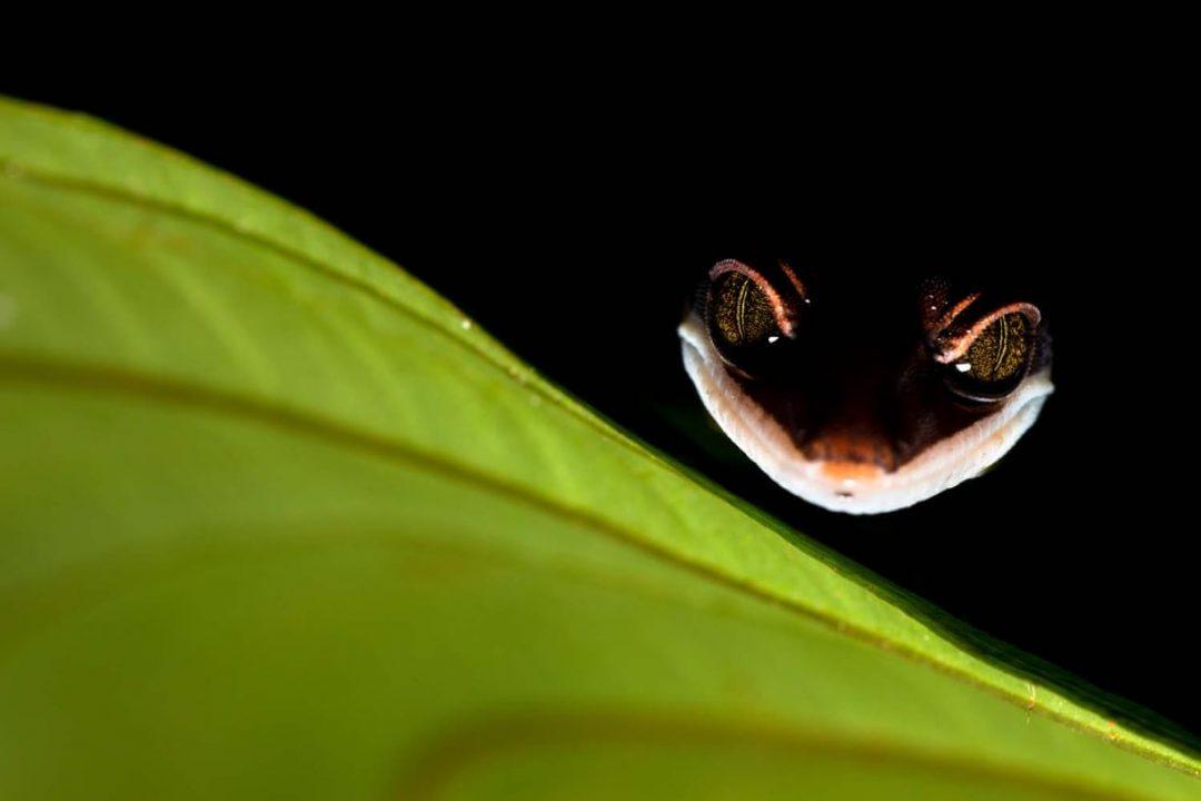 La natura in tutto il suo splendore: i vincitori del GDT Nature Photographer of the Year