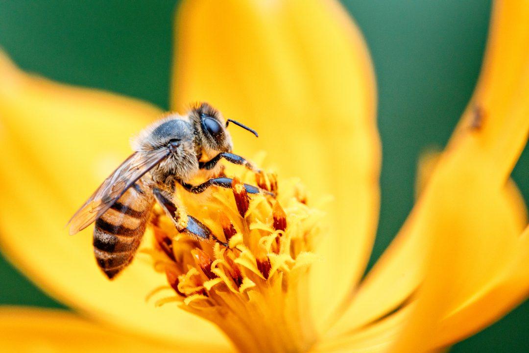 Giornata mondiale delle api: 20 maggio