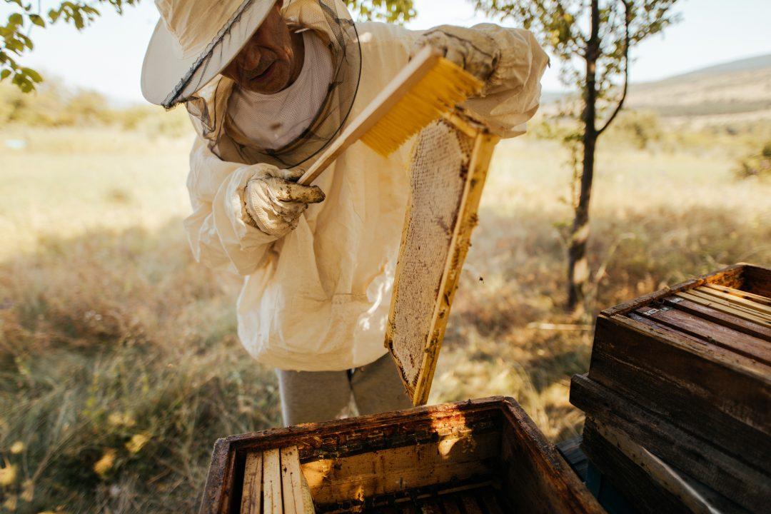 Sei città italiane amiche delle api