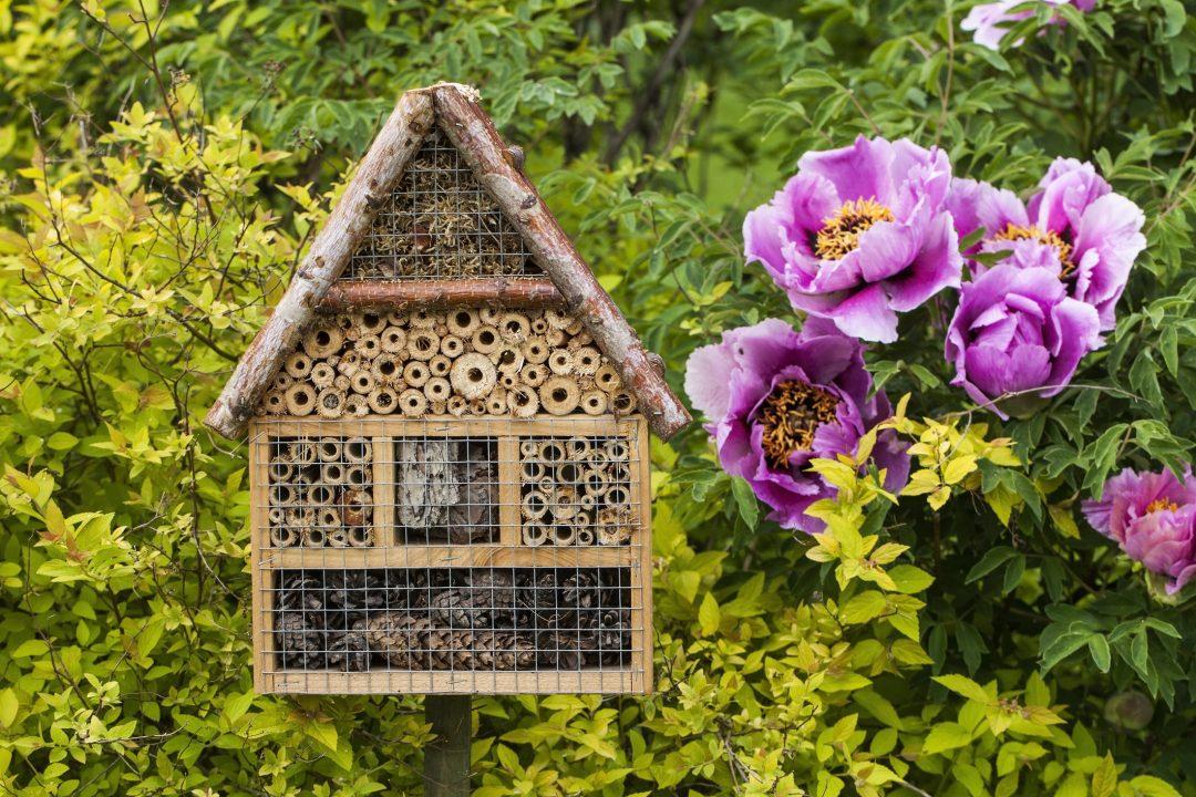 5 buone pratiche per aiutare le api nella quotidianità