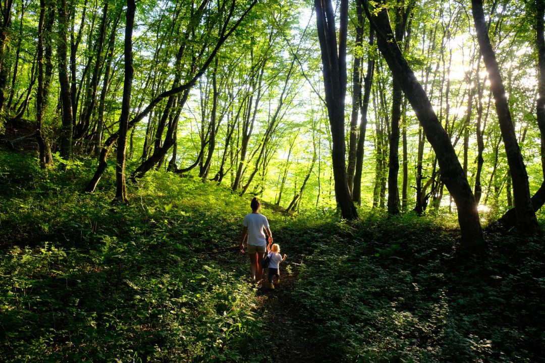 Forest bathing sul monte Cucco