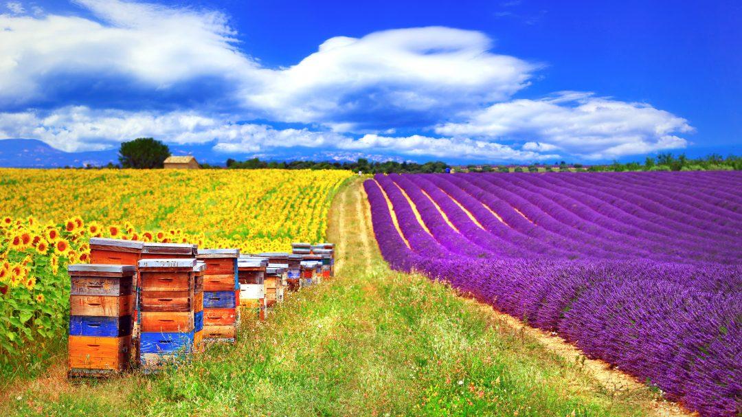 Agricoltura al servizio delle api