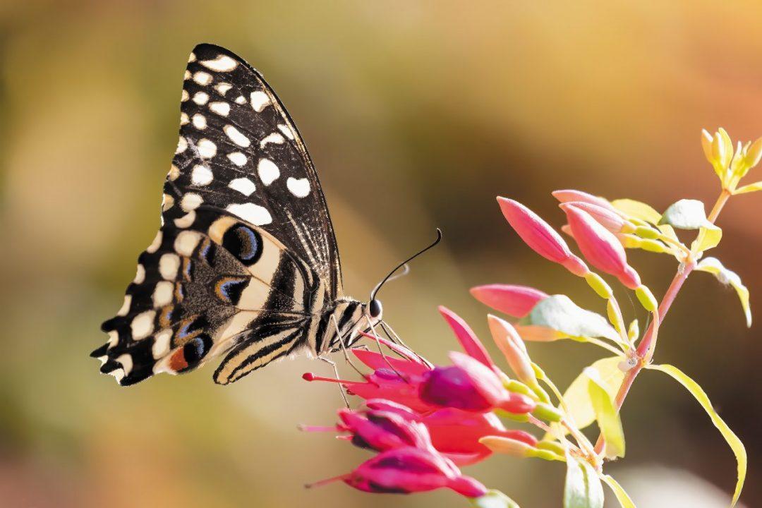 weekend Oltrepò per avvistare le farfalle