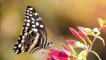 weekend Oltrepò pavese per avvistare le farfalle