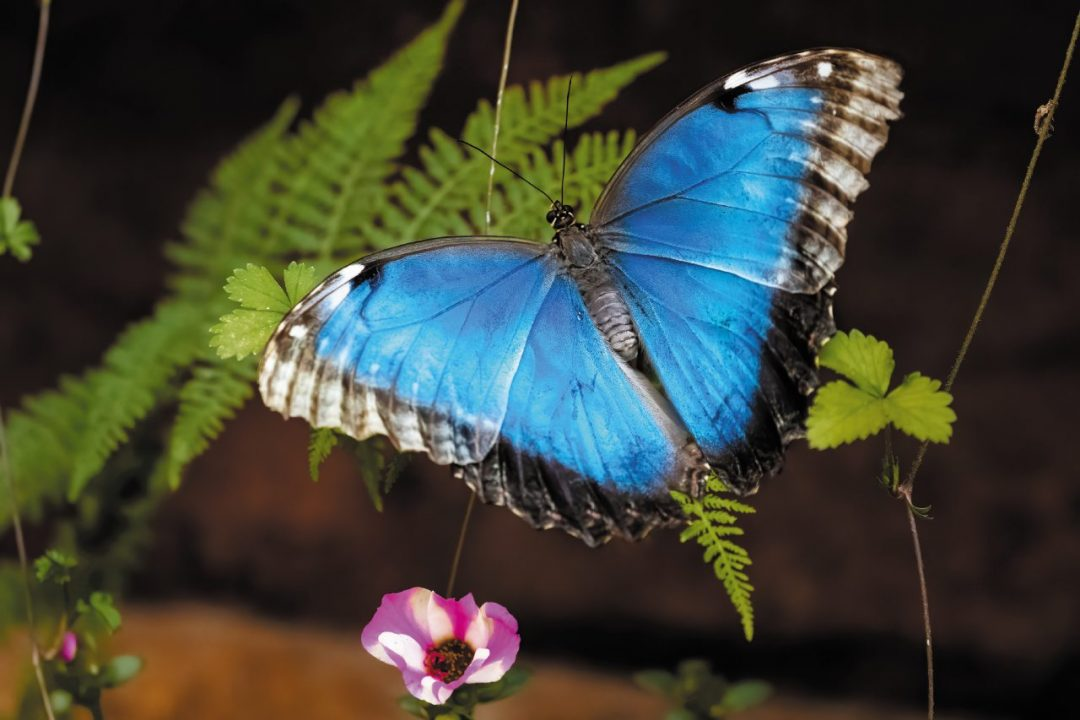 Weekend nell'Oltrepò: gita sul sentiero delle farfalle