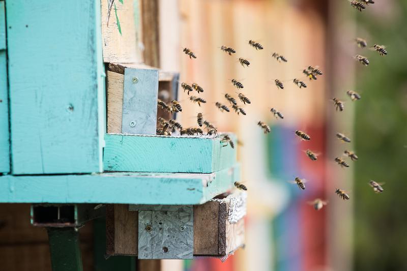 Alcuni dati sull'attività delle api nel mondo