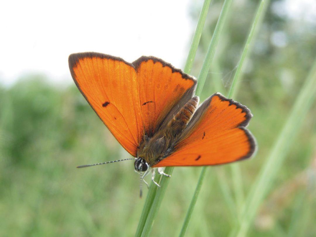 A chi rivolgersi per un tour tra le farfalle