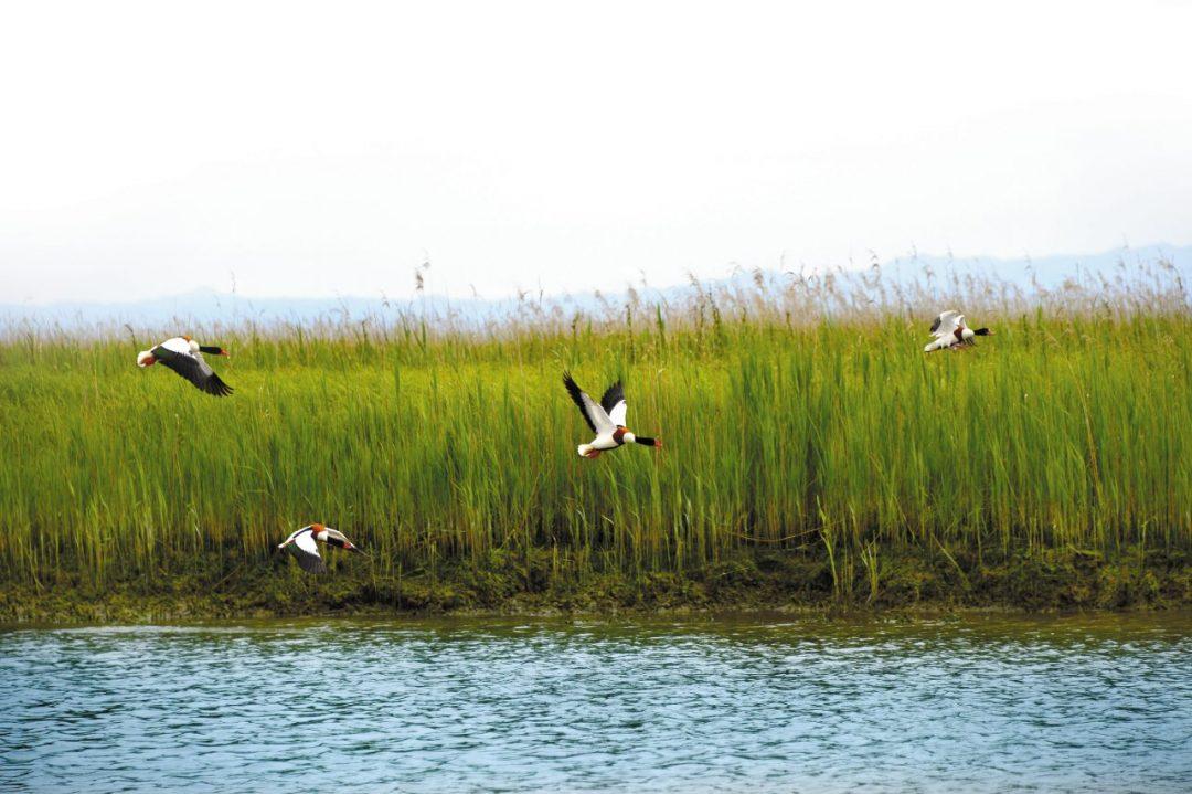La Laguna di Marano, un ecosistema unico