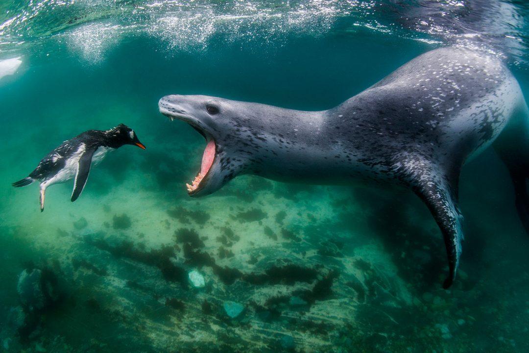 Canguri, vulcani, foche e barracuda: le straordinarie foto del concorso BigPicture 2021