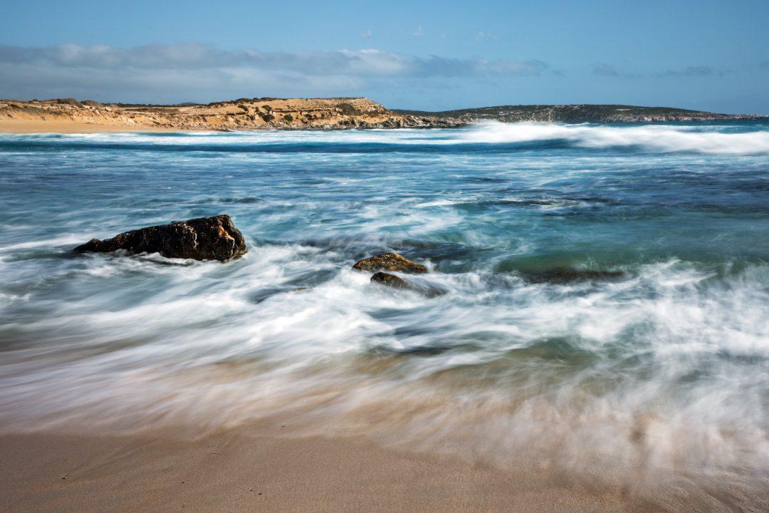 Dove ammirare leoni marini (e non solo)