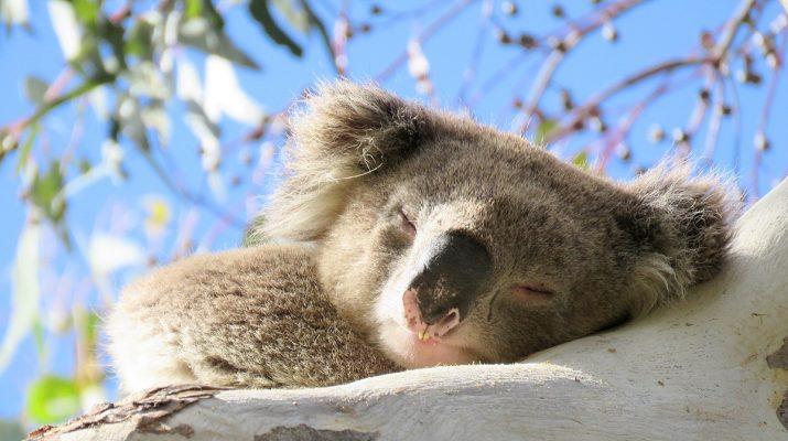 Foto Silenzio, parla l'Australia. Ecco da dove riparte il continente della Natura