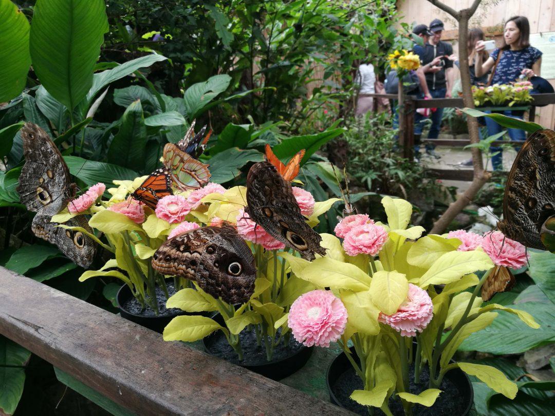 Parco Casa delle Farfalle e Bosco delle Fate