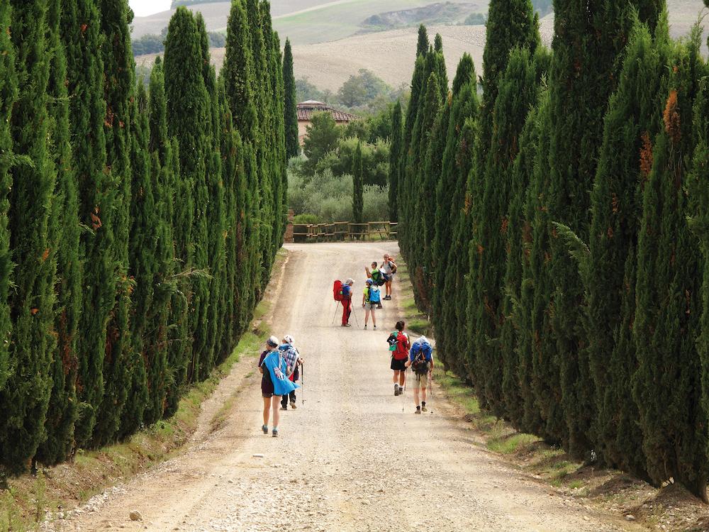 Cipressi a Podere Caparzo, verso Torrenieri, lungo una tappa della Via Francigena, da Siena a Montalcino.