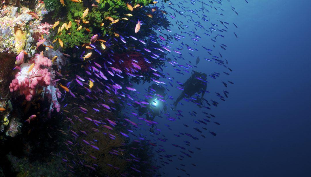 Le barriere coralline più belle del mondo per lo snorkeling