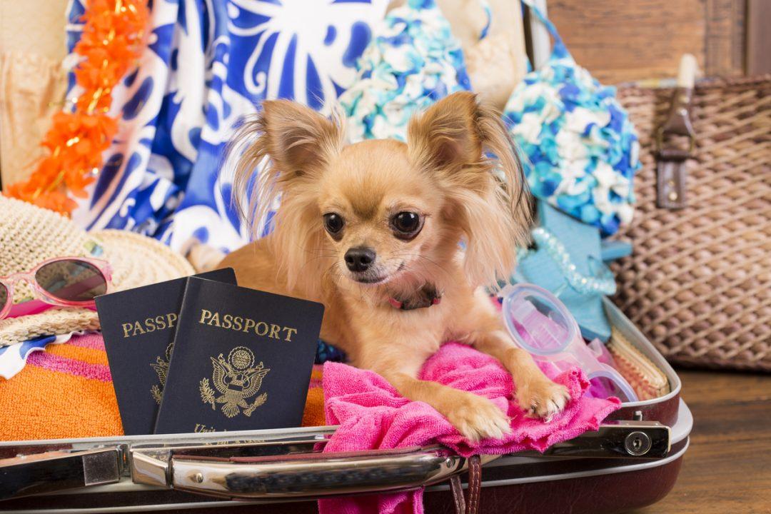 Il passaporto degli animali